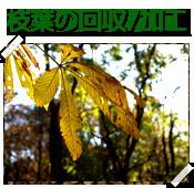 枝葉の回収